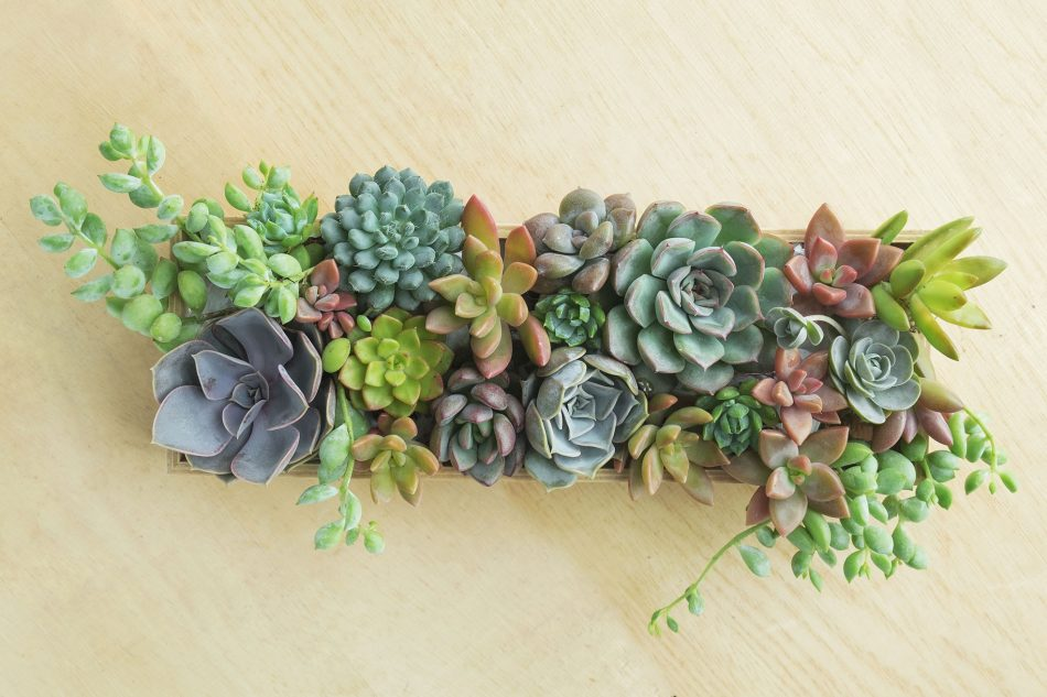 decorating with plants on the wall