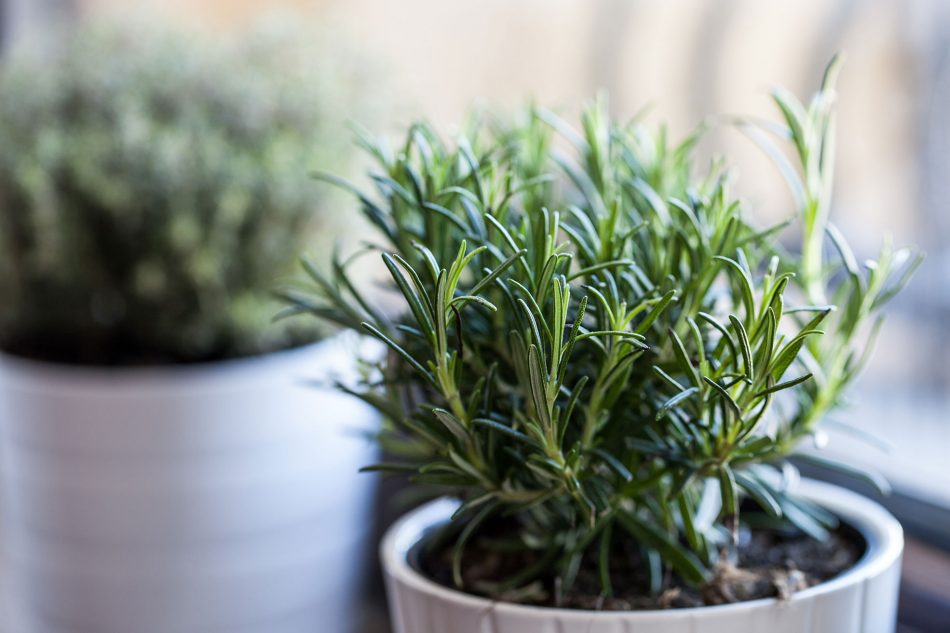 decorating with plants in the kitchen