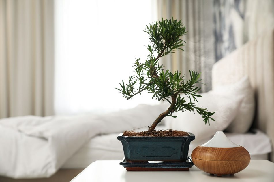 decorating with plants in the bedroom