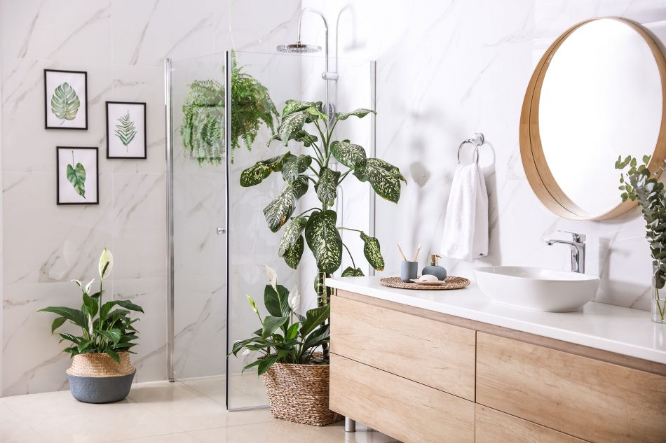 decorating with plants in the bathroom